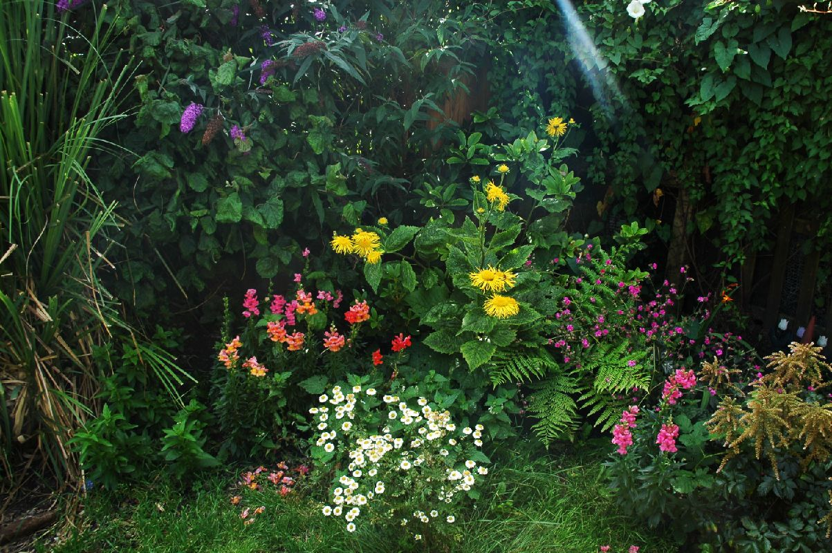 Various Plants In Garden