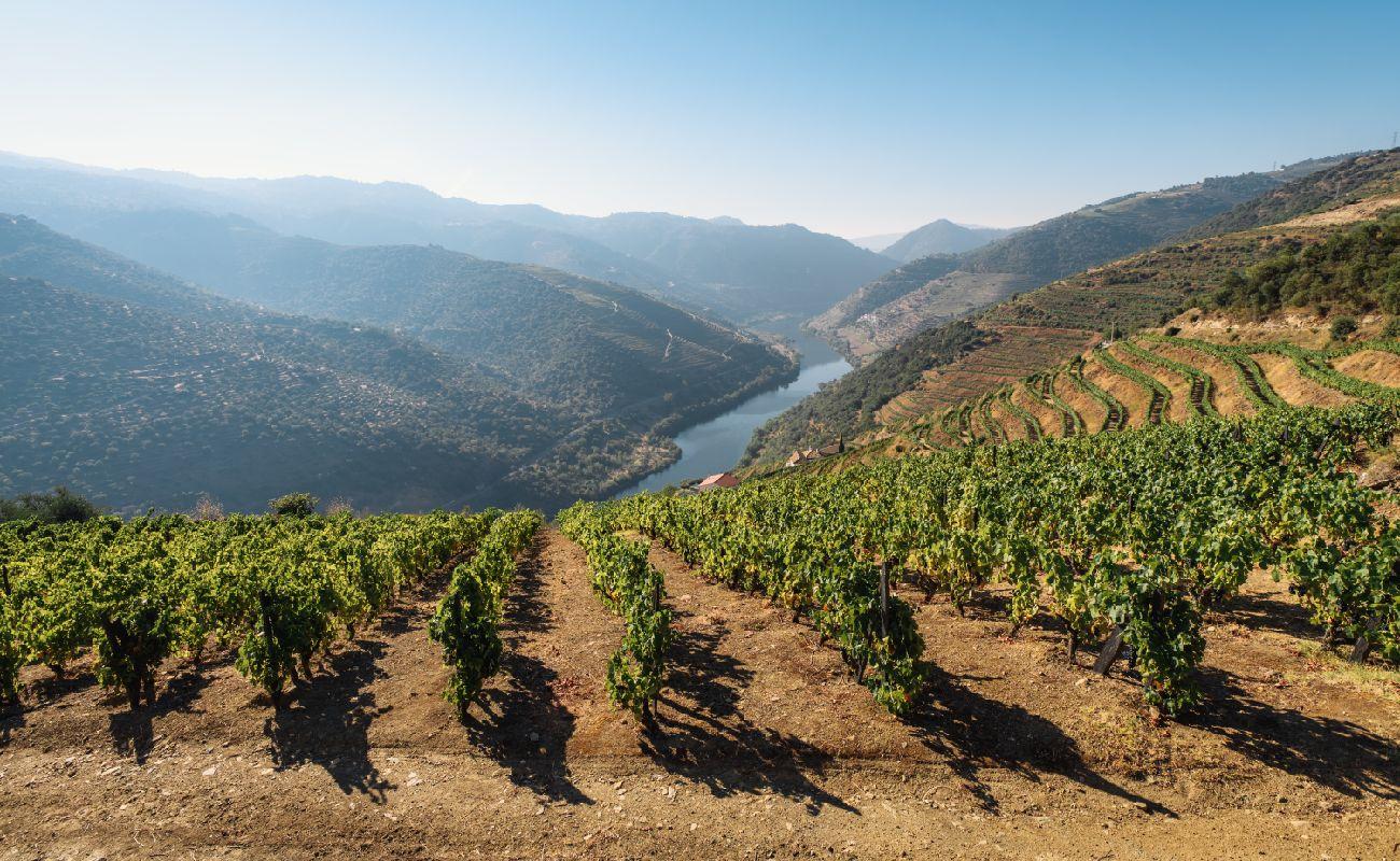 Douro Valley Vineyards - Douro, Portugal
